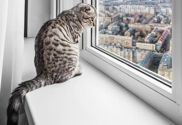 猫 適切な温度 湿度