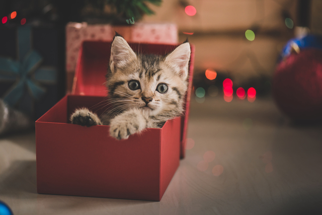 猫 好きな場所