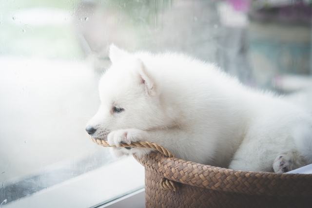 犬 梅雨 エアコン 温度