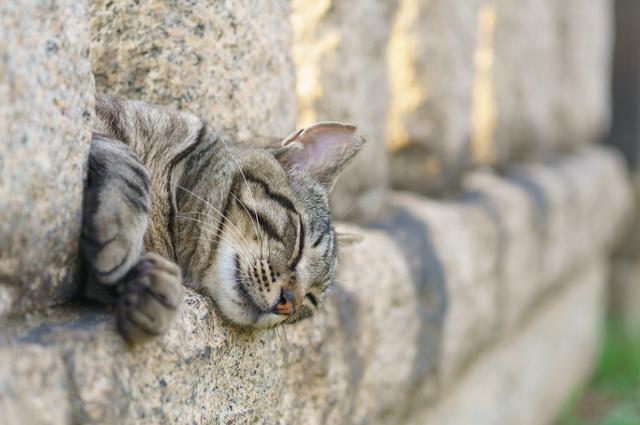野良猫 生活