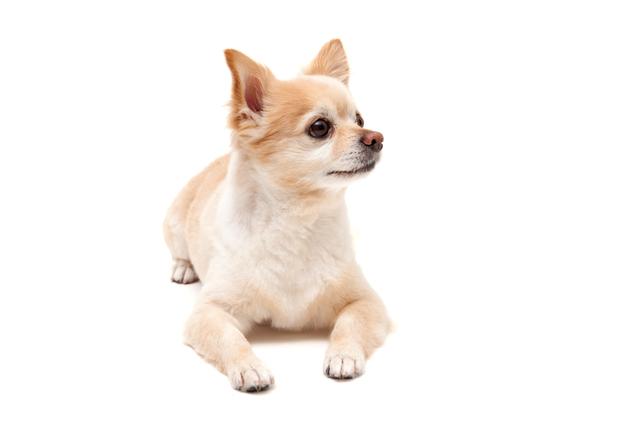 犬 サマーカット メリット デメリット