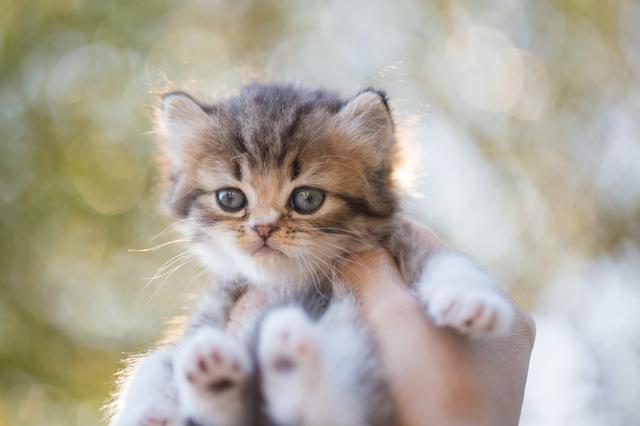 猫 マッサージ 気を付けること