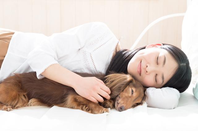 犬 一緒に寝る 注意点