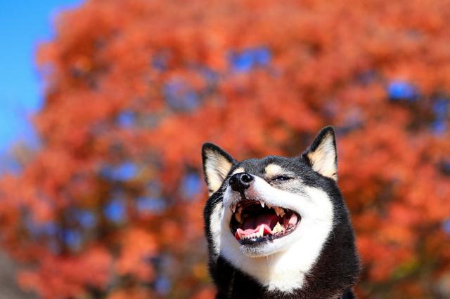犬 お出かけ 秋