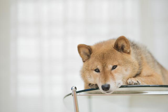 犬 目 病気