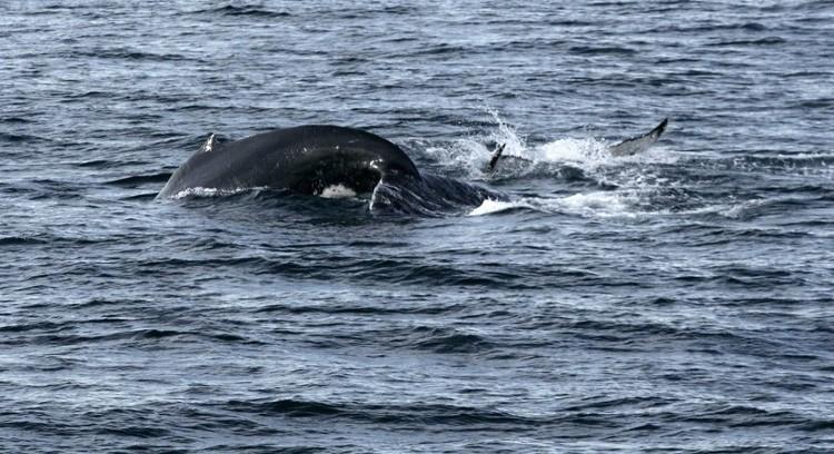 Ballenas en la Patagonia
