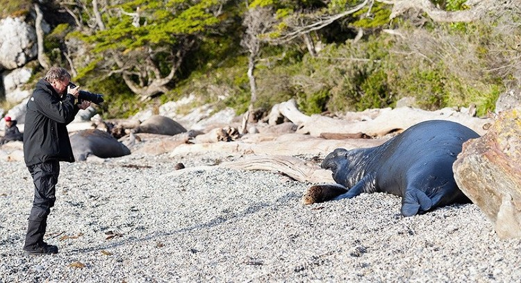 Fauna en Magallanes