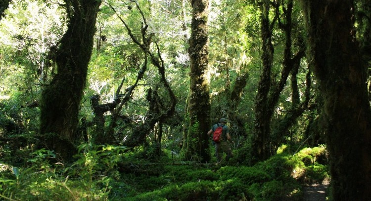 Patagonian forest