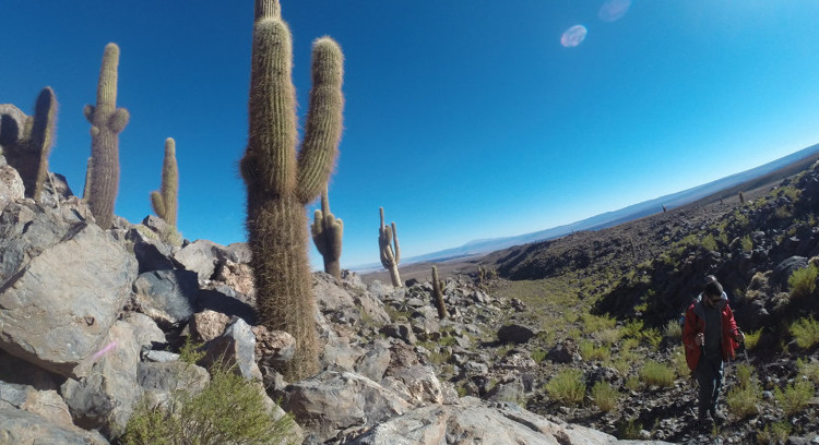 Trekking Valle de los Cactus