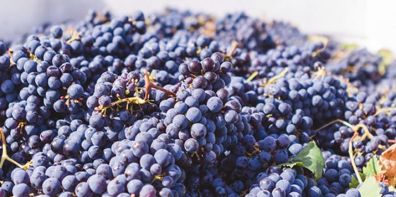 Scout & Cellar Grape