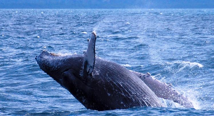 Avistamento de Baleias