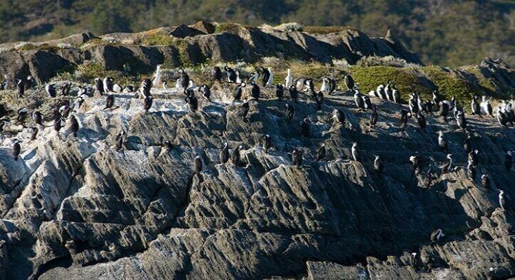 Roca de Lobos