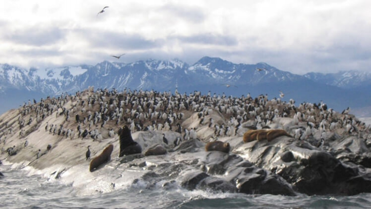Navegacion Ushuaia Cormoranes