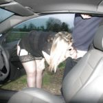 pics from dogging nights