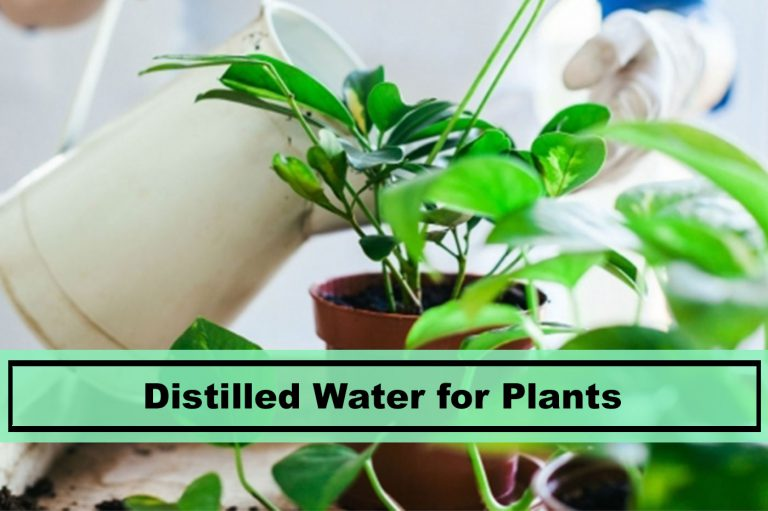 Using Distilled Water for Plants Tips for 2019 - Plants ...