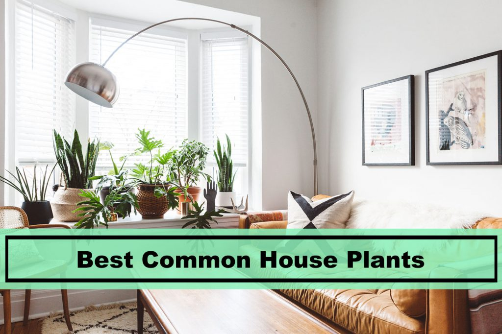 Best Common House Plants for 2019 (with difficulty level ... on common house plants identification, schefflera house plant care, common office plants, miniature roses and their care, house of an umbrella plant care, house plant peace lily care, common house plants and their names, common house plant red leaf, common house plants in america, common house plant bugs, common flowering plants, tropical plants care, common vine plants, delray plants care, common indoor house plants, common household plants, common plant identifier, common types of plants, types of house plants and their care, common house plant ivy,