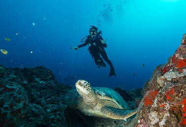 Product 2 Tank Reef Dive