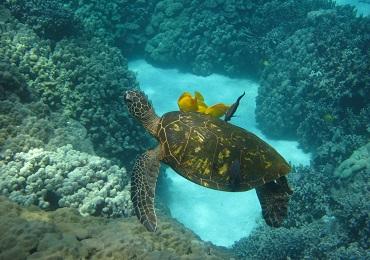 Kona Snorkel Adventure image 1