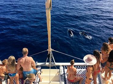 Tradewind Sail- Waikiki image 2