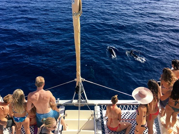 Product Tradewind Sail- Waikiki