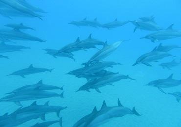 Island Princess Dolphin Snorkel Catamaran MID DAY Waikiki image 1