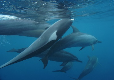 Island Princess Dolphin Snorkel Catamaran-Sunrise Waikiki