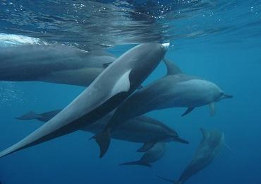 Product Island Princess Dolphin Snorkel Catamaran-Sunrise Waikiki