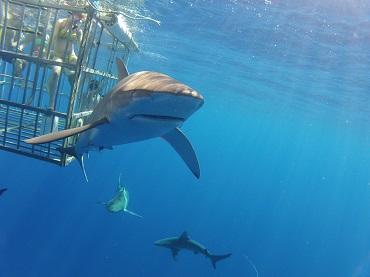 Product North Shore Shark Adventure