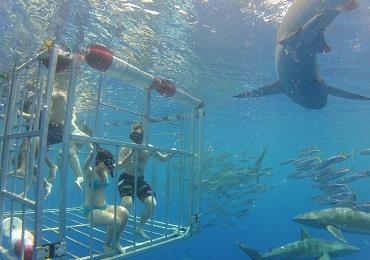 North Shore Shark Adventure image 2