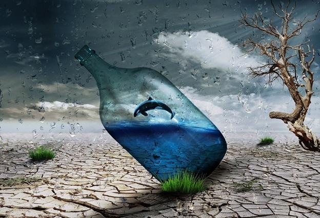 Bottle Dolphin Wind Art