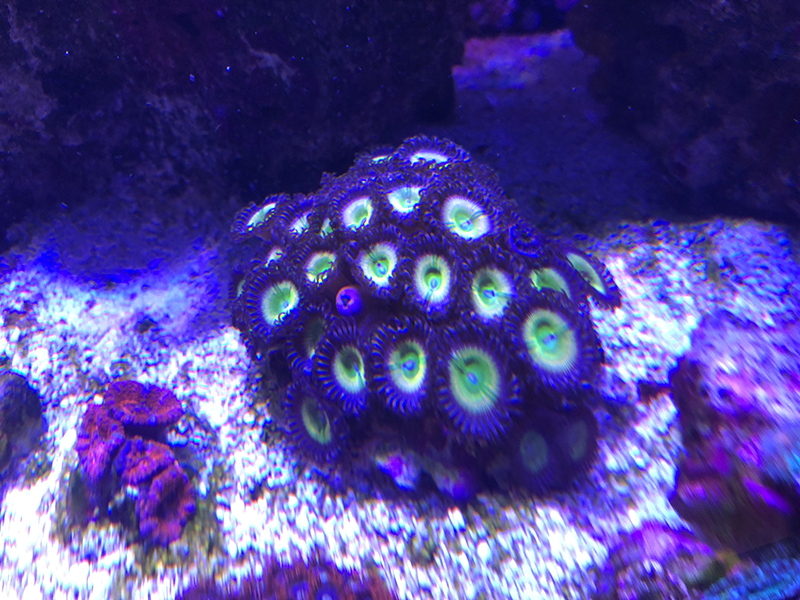 7-23-19-Group-Buy-Zoa.png