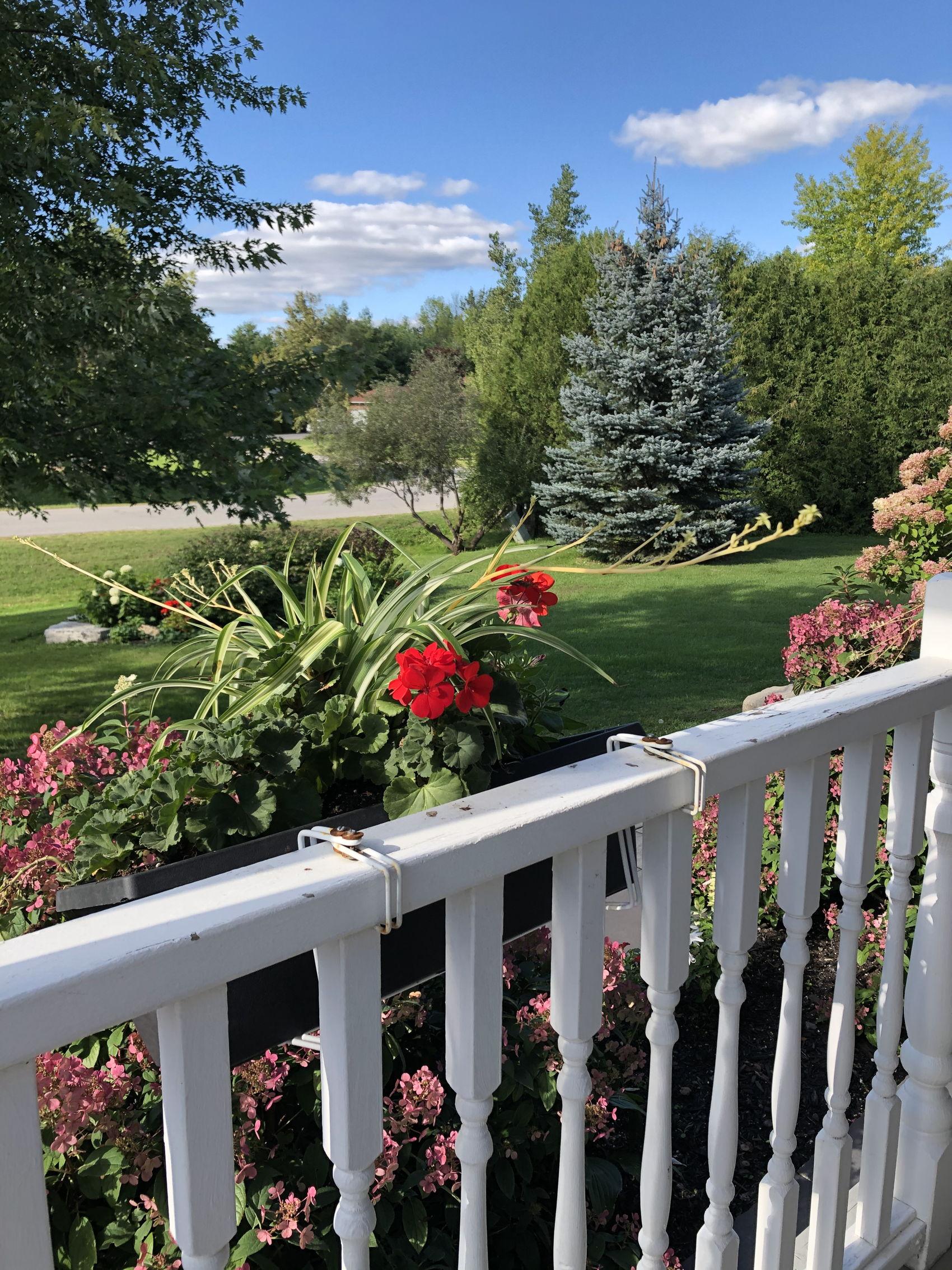 IMG-4110 front garden.jpg