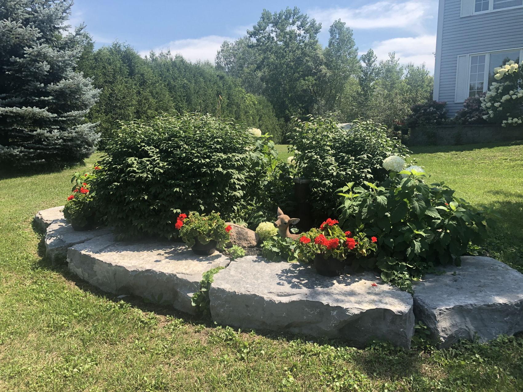 IMG-3935 front rock garden.jpg