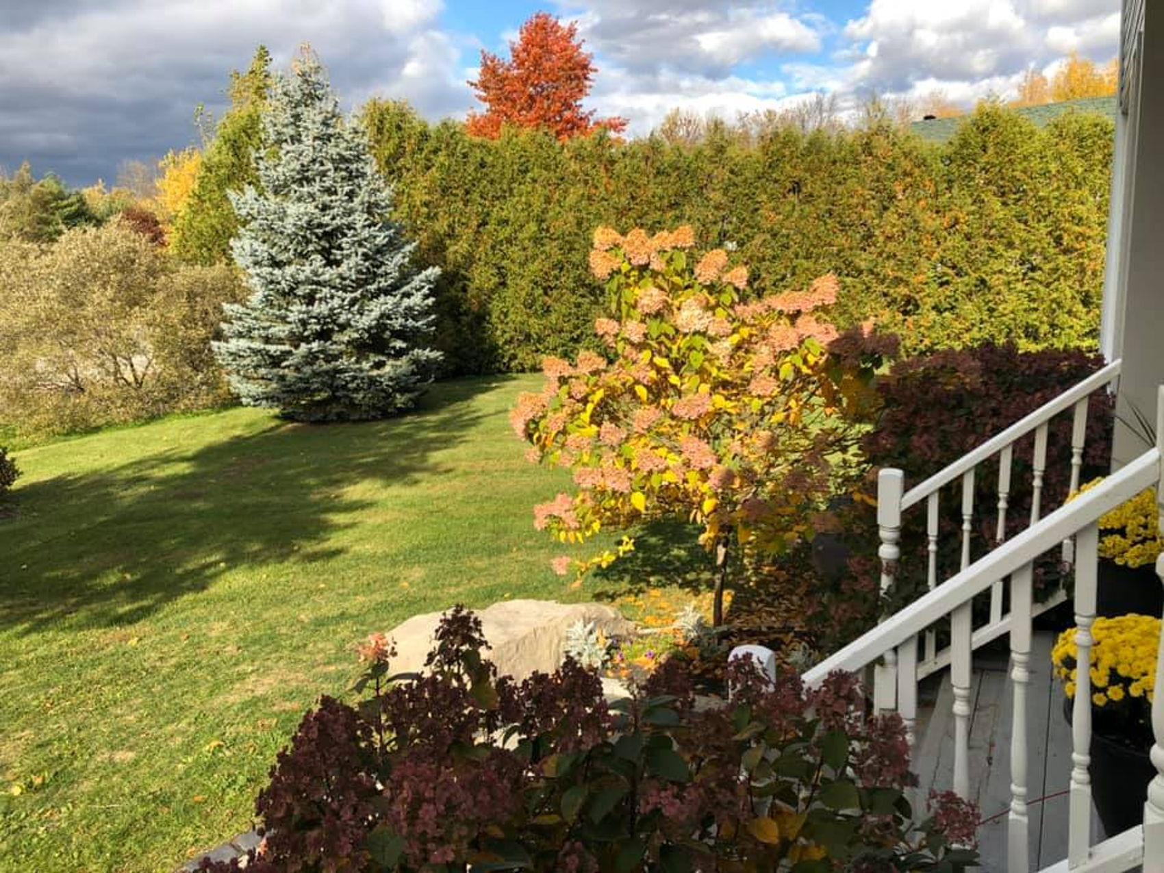 front yard Fall.jpg