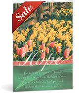 Bulletin tulips   daffodils