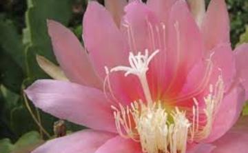 Spring Kado Retreat: The Way of Flowers
