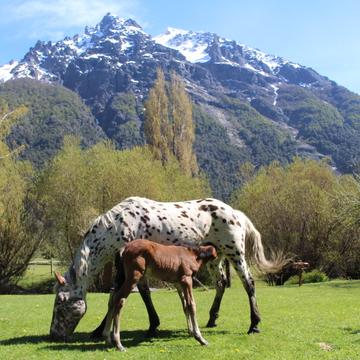 Prana and Ponies: Patagonia