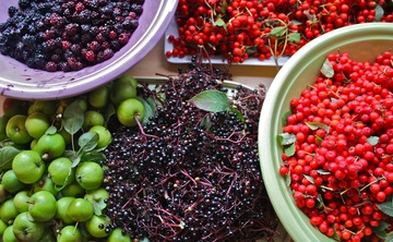Hedgerow Harvest | Yoga & Foraging | 2 day