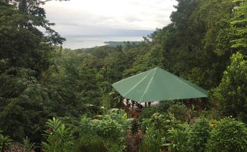 Align to Shine: Jungle Discovery Yoga Retreat