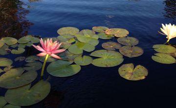 Lovingkindness Meditation Retreat