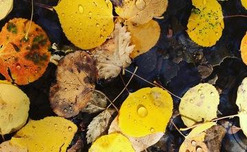 Fall Colors Hike 2018