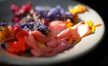Forage & Feast – Wild food-finding – Summer