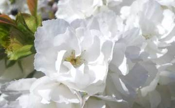 Heritage & Spring Garden Open Day