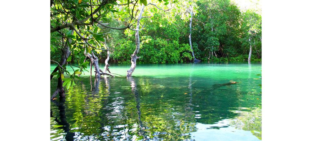 mangroves2.jpg