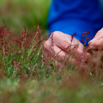 4-hour Foraging Course with Professional Forager Robin Harford