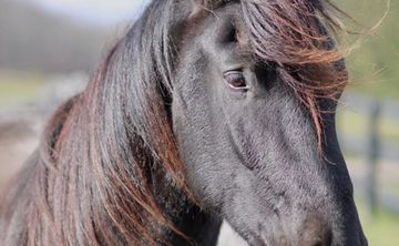 Healing with Horses: Equine Therapy Retreat