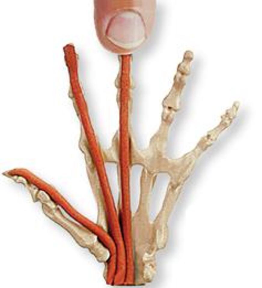 Anatomy in Clay® Centers - Center - Retreat Guru