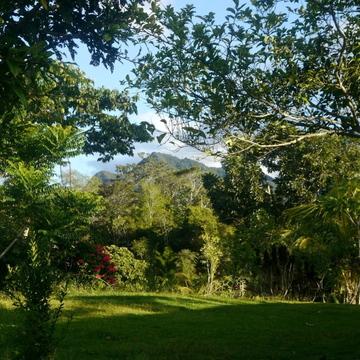Ayahuasca and Master Plant Healing Retreat in the Peruvian Amazon
