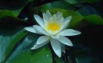 Sharpham House: Taking Mindfulness Deeper Retreat-(5 nights)