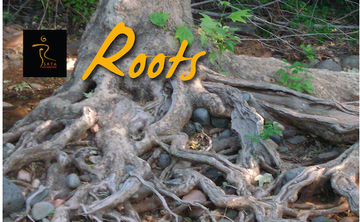 Roots: 5Rhythms Waves Workshop - 3-Day